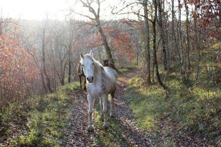 chevaux_2.JPG