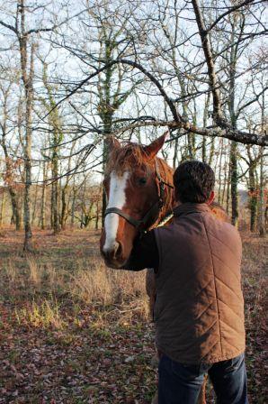 chevaux_4.JPG