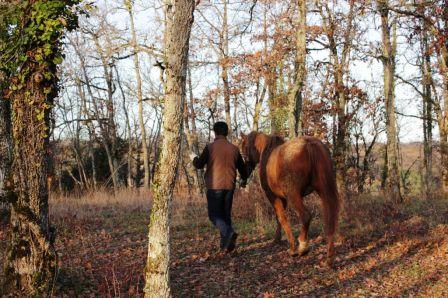 chevaux_8.JPG