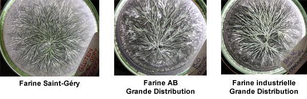 comparatif-gluten-farine